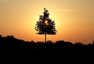 Lebensbaum Abend